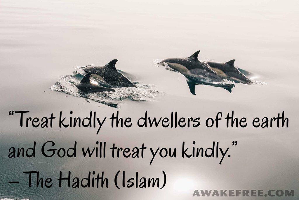 Peace-Quotes-Treat-Kindly-Dwellers-of-Earth-Hadith-Islam-AwakeFree.com